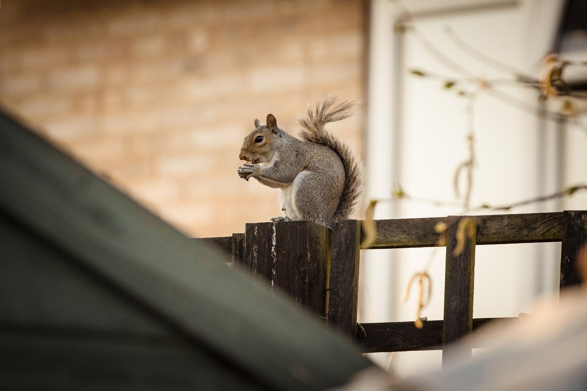 Cosa si prova a correre tra i rami di un albero come uno scoiattolo?